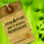 La forza curativa dei germogli e i benefici depurativi della betulla